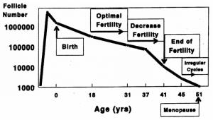 Fases da menopausa e folículos ovarianos