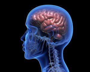 A causa da menopausa está na queda dos hormônios femininos que por sua vez causa alterações neurológicas. Cabeça em imagem 3 D que permite a visão do cérebro.