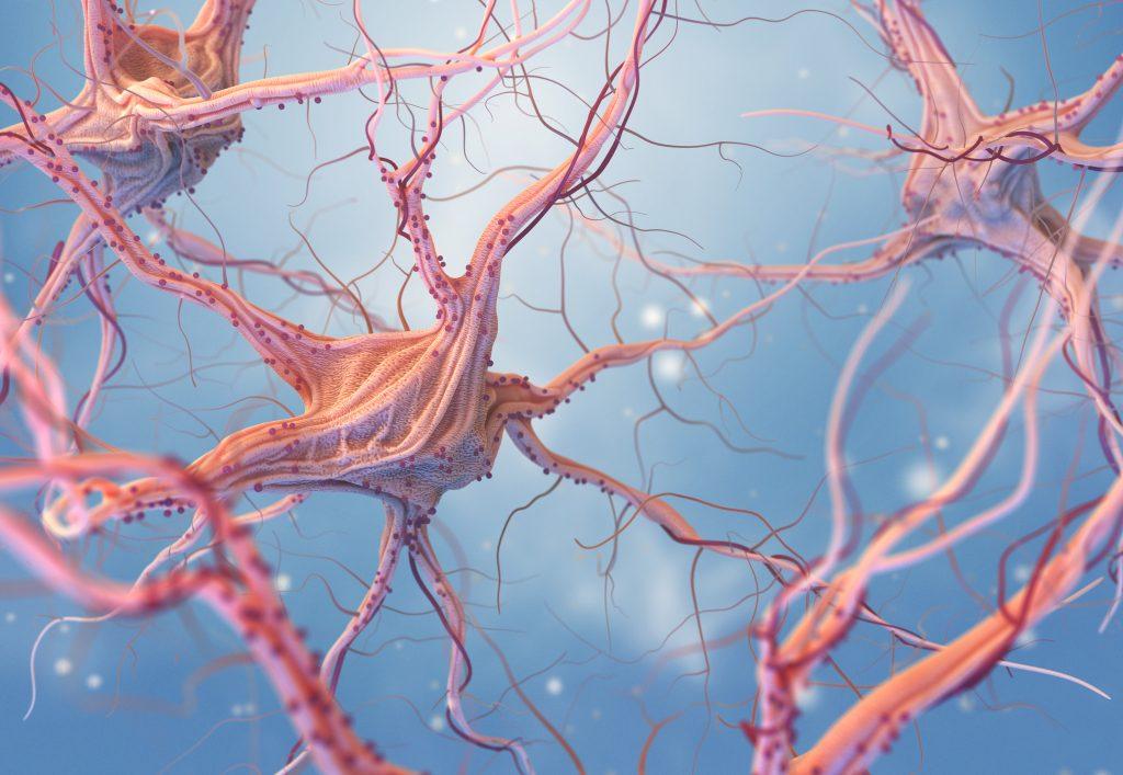 Desenho de neurônios do sistema nervoso.