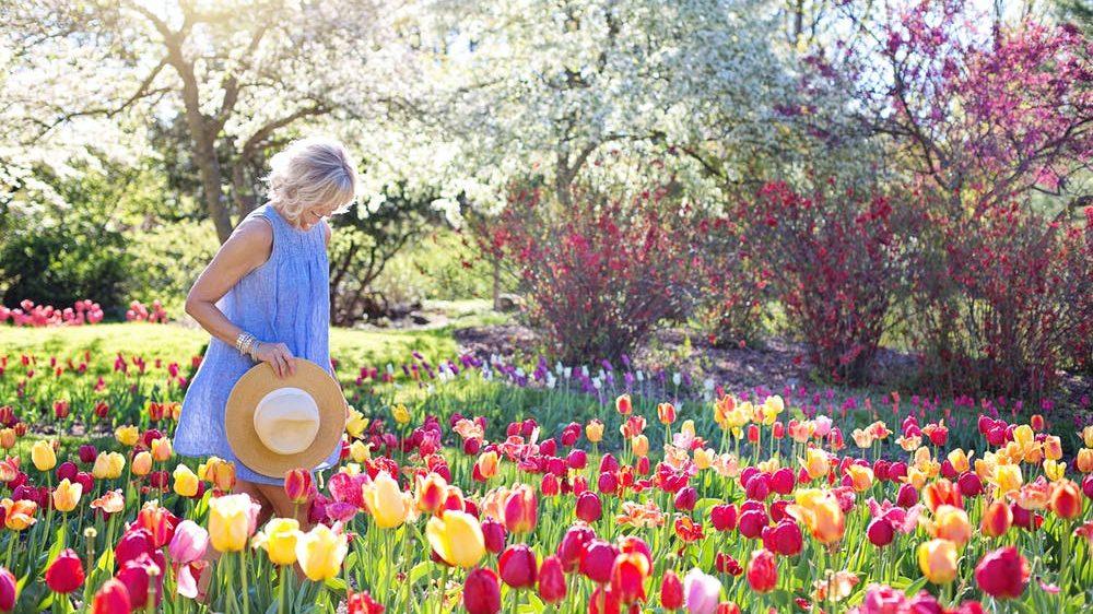 Jardim iluminado pela Luz do sol sugere que acordar cedo emagrece...